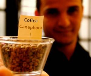 O Canephora é uma das variações produzidas no Brasil